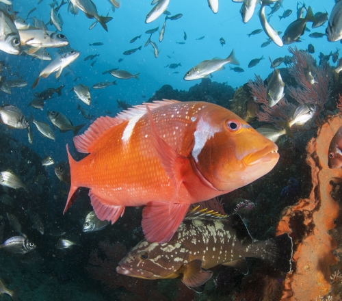 The beauty of a MPA De Hoop Steve Benjamin 002