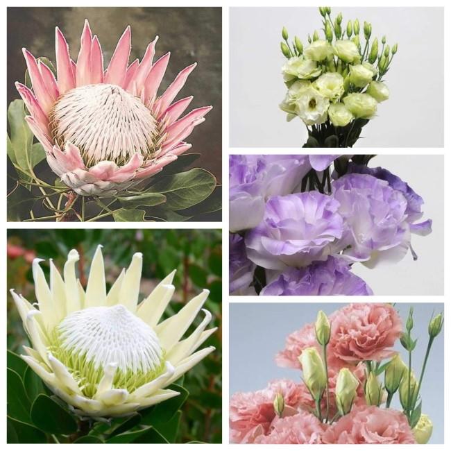 ronnoco protea lisianthus