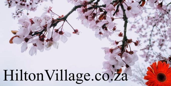HiltonVillage.co.za