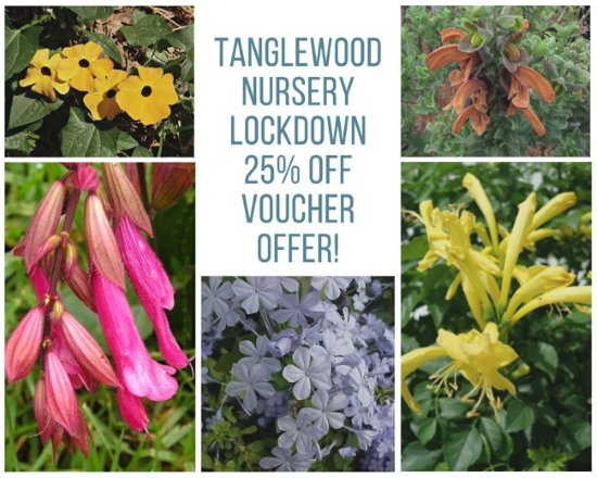 tanglewood voucher cover